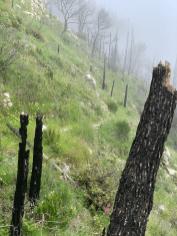 laufen-almalfi-trails-trailrunning-Pfad-der-Goetter-3