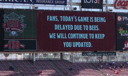 Reds and San Francisco Giants Game Was Delayed Because of Bees