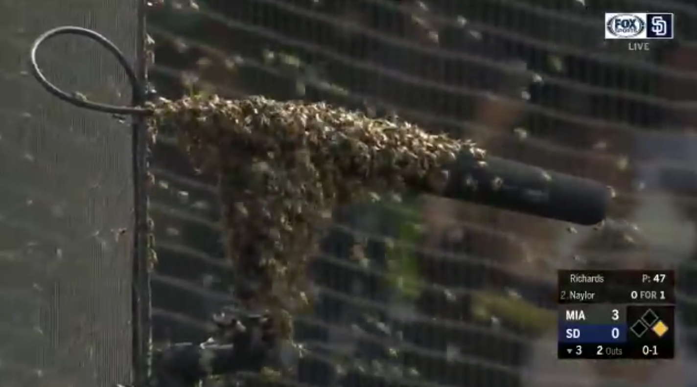 Marlins and Padres Game Interrupted by Swarm of Bees