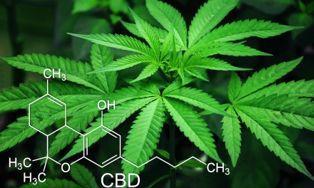 Top Picks CBD Products for Working Out