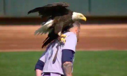 A Bald Eagle at Twins Opener Attacked Mariners Pitcher