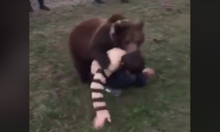 Khabib's Father Posts Video of Another Youngster Wrestling With a Bear