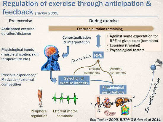 regulation-of-exercise