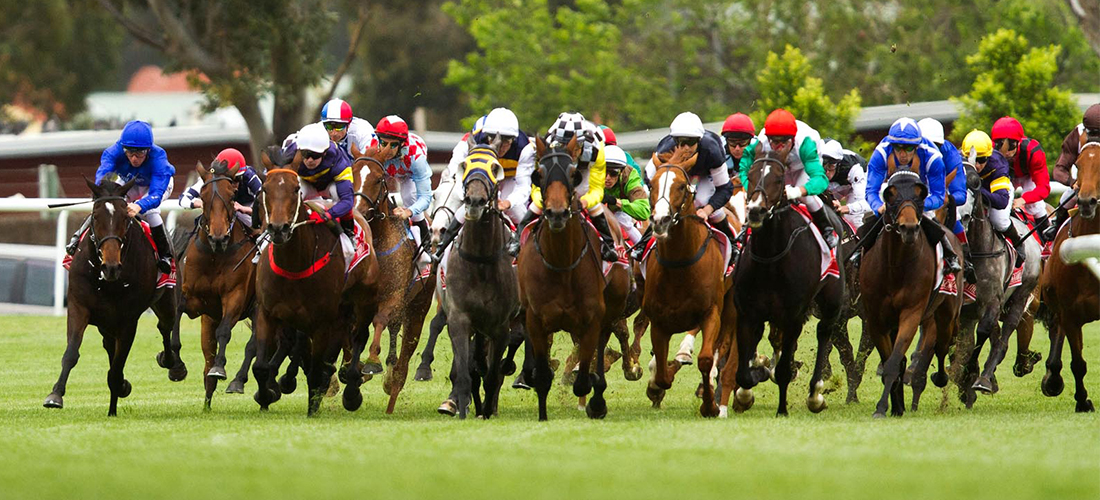 Horses of Melbourne Cup