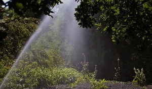 Going Green With Smart Irrigation Systems