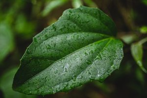 Benefits of Smart Irrigation Systems for Homes in Delaware
