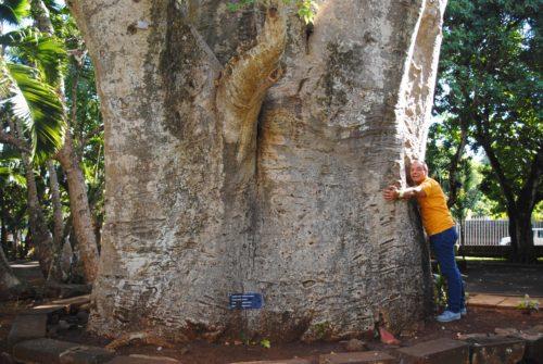 Il giardino botanico di Pamplemousses, nel Nord di Mauritius, con piante indigene ed esotiche