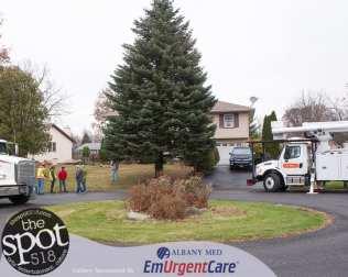 tree-6002