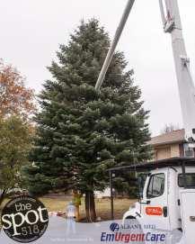 tree-6027