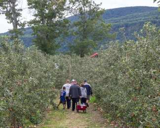 apples web-6294
