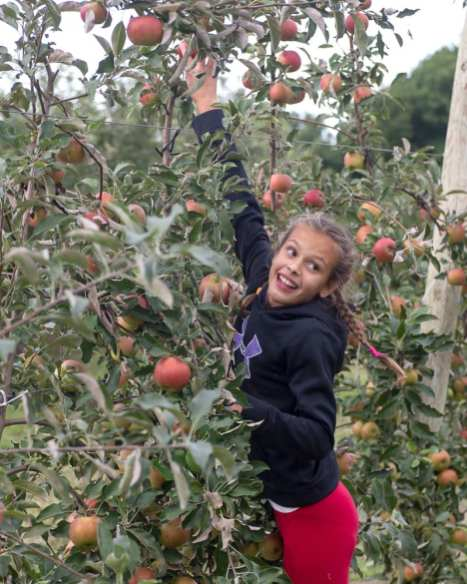 apples web-6311