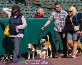 paws in the park-9830