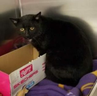 Slim is a 7-year-old male