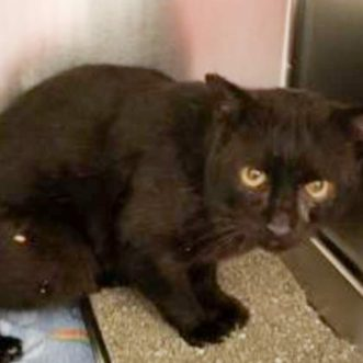 Stevie is a 5-year-old male