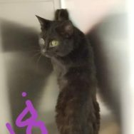 Zilly is a 5-year-old female