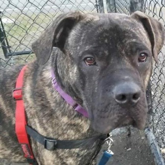 Enzo is a 2-year-old male