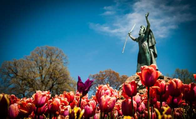 Virtual Tulip Festival broadcasts Saturday at noon