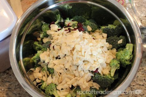 Broccoli Salad Recipe | spotoftedesigns.com