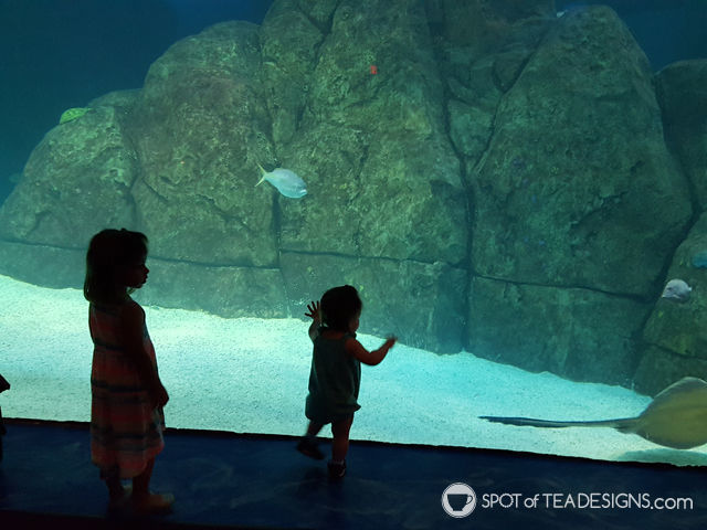 12+ great places for toddlers in the greatest central new jersey area. Adventure Aquarium in Camden NJ #toddlerlife #newjersey | spotofteadesigns.comtral new jersey area. #toddlerlife #newjersey | spotofteadesigns.com