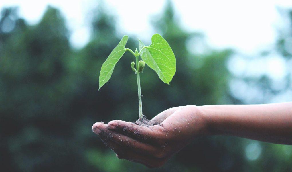 Main tenant une bouture d'arbre, sur fond vert légèrement embrouillé.