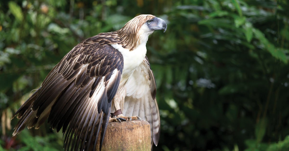 WANTED: PHILIPPINE EAGLE KILLER, REWARD TO BE GIVEN
