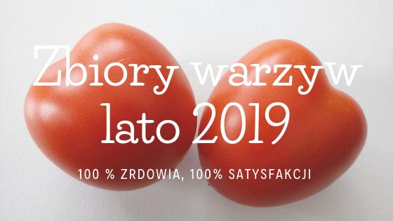 Zbiory warzyw lato 2019