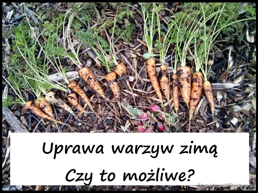 Uprawa warzyw zimą