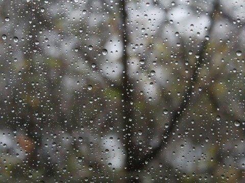 Grau und regnerisch - der November 1