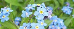 Etwas durch die Blume sagen - © AmalaWolf, Wikipedia