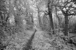 Hinter dem Busch halten - © jusben, morguefile.com