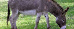 Sich eine Eselsbrücke bauen - © Wikipedia