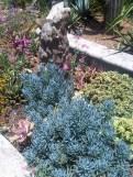 Saint Verde Succulents