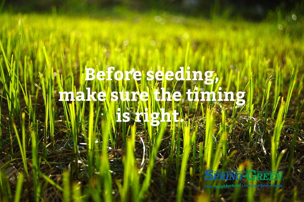 Are You Sure You Want To Plant Grass Seed This Spring