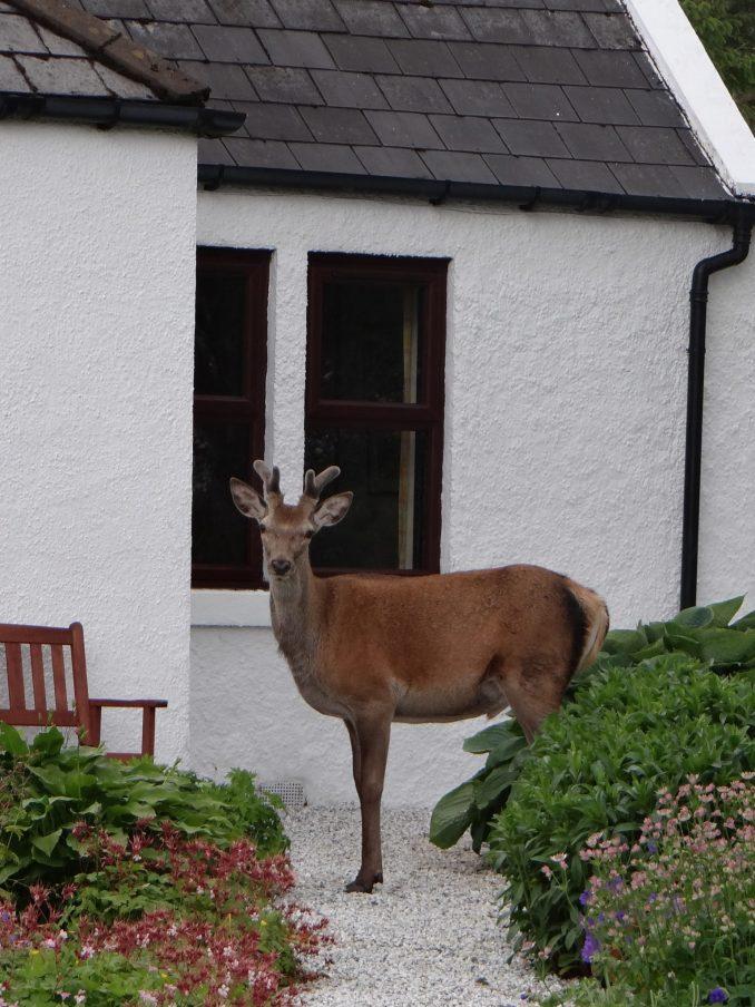 Mega fauna comes to visit