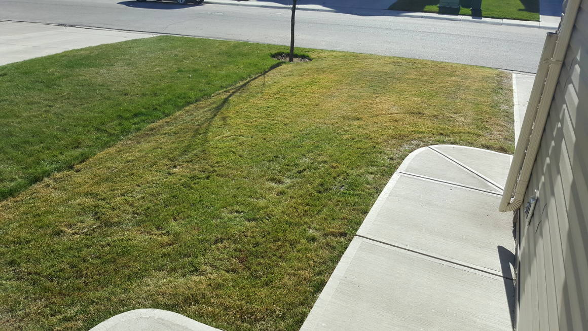 You Rake Lawn Your Should Spring