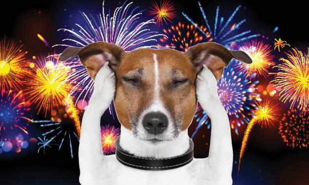 Remember Your Pets This July 4th; Tips To Keep Them Safe
