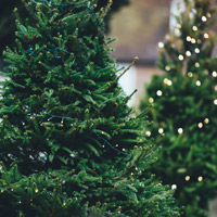Things to Do this Weekend in Colorado Springs: Tree Recycling