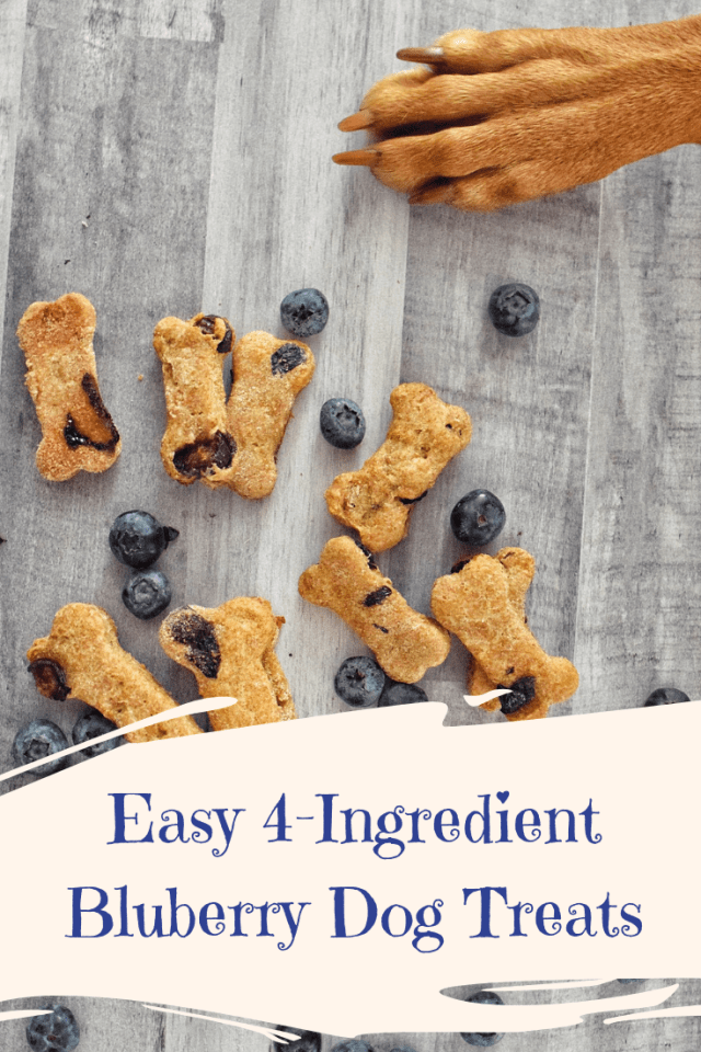 Easy 4-Ingredient Blueberry Dog Treats