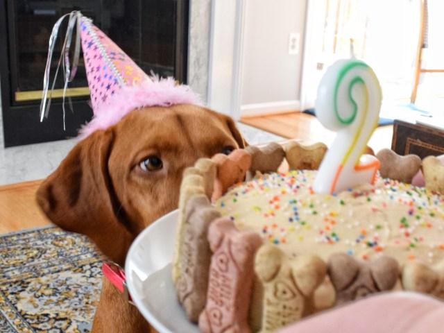Awesome Peanut Butter Banana Pup Cake Sprinkles Sea Salt Personalised Birthday Cards Veneteletsinfo
