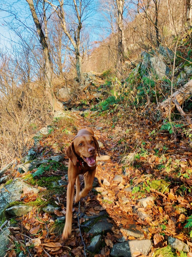 Dog Friendly DC Area Hiking Guide