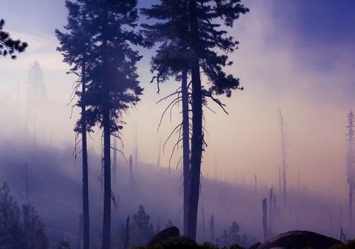 Wild Fire Smoke Inhalation