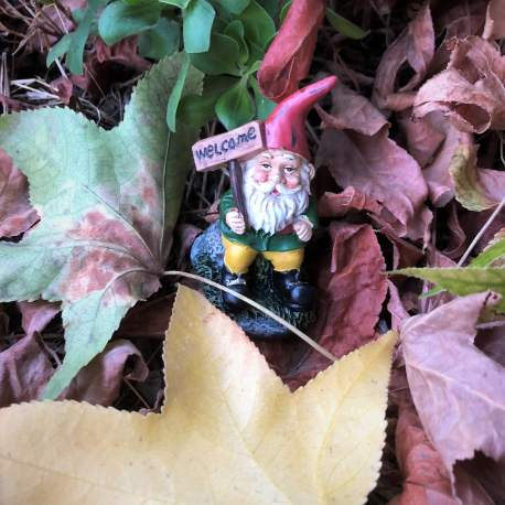 Welcome Gnome from Sprouted Dreams (6)