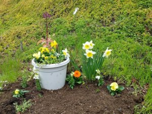 Spring Yellow Fairy Garden by Sprouted Dreams3