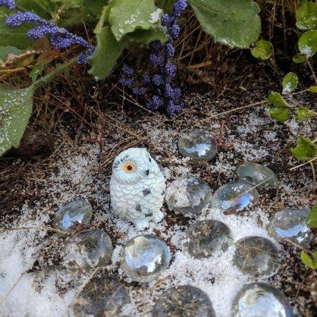 Snowy Owl6