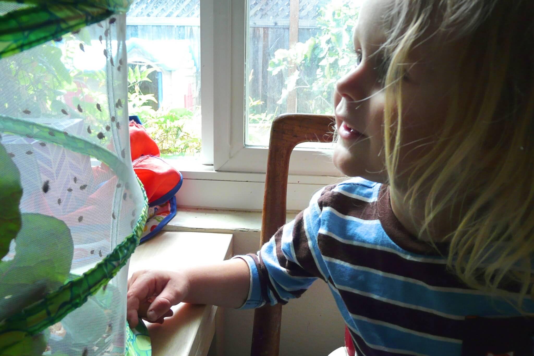 A boy smiles at his ladybug habitat.