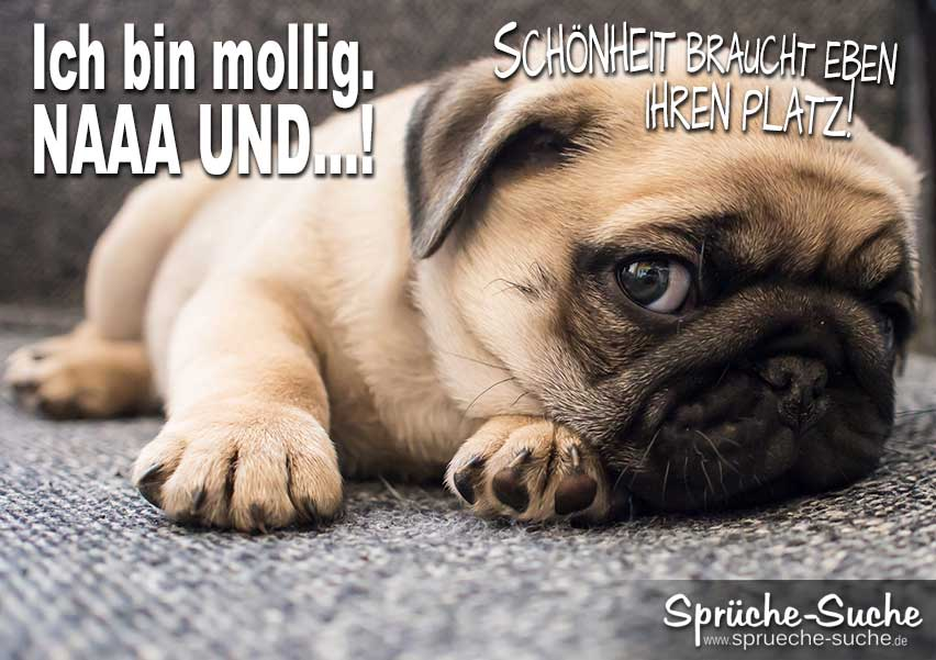 Tier Spruche 75 Tier Hund Spruche Zum Nachdenken 2020 02 23