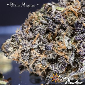 Blue Magoo - Cannabis Macro Photography by Spurs Broken (Robert R. Sanders)