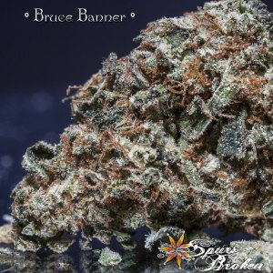 Bruce Banner - Cannabis Macro Photography by Spurs Broken (Robert R. Sanders)