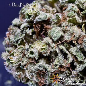 Deathstar - Cannabis Macro Photography by Spurs Broken (Robert R. Sanders)