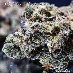 Girl Scout Cookies (GSC) -Cannabis Macro Photography by Spurs Broken (Robert R. Sanders)